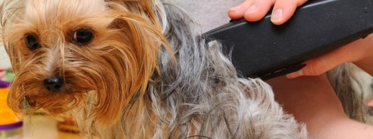 Dogs that are Groomed on a Regular Basis Are Healthier Dogs
