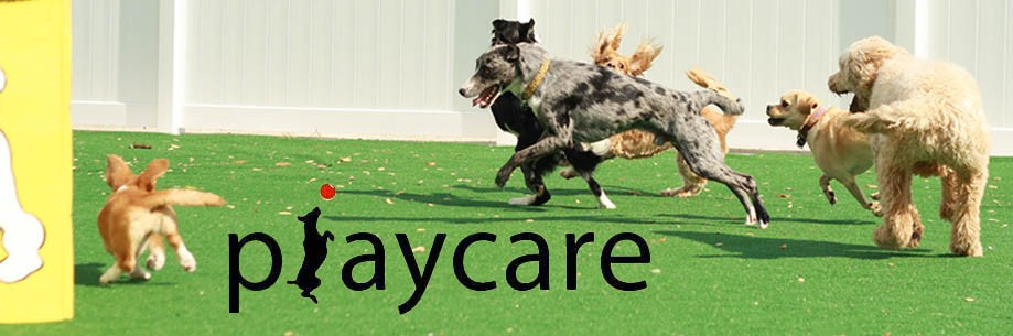playcare slide